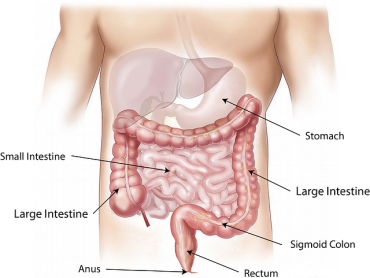 Gut Microbiota to IBS
