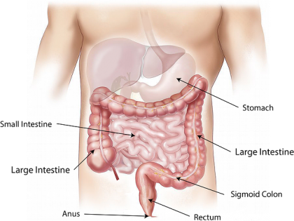 How Important is the Gut Microbiota to IBS?