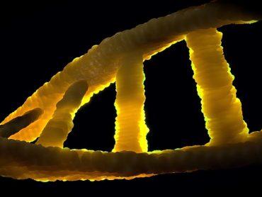 CRISPR the gene editing tool
